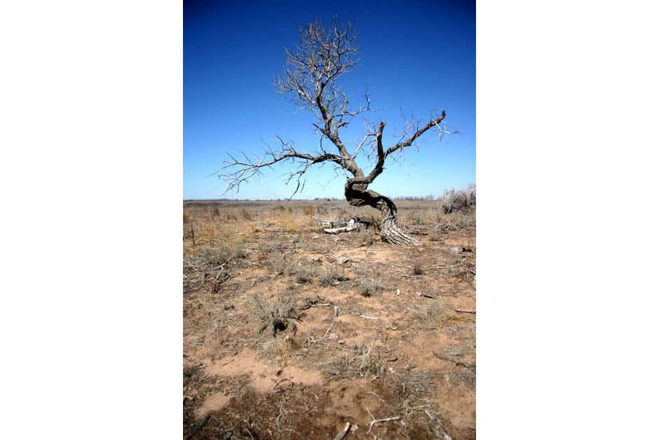 Solitary tree in desolate landscape.