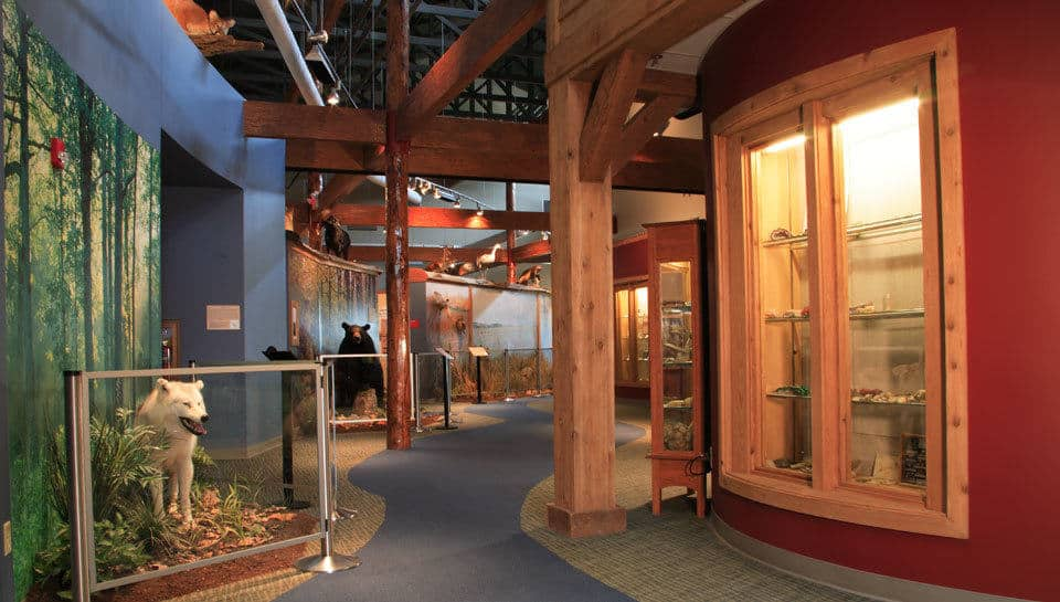 A river of carpet winds down the hallway, visually connecting the vast collection of taxidermy animals and other exhibits found throughout the Remington Nature Center.